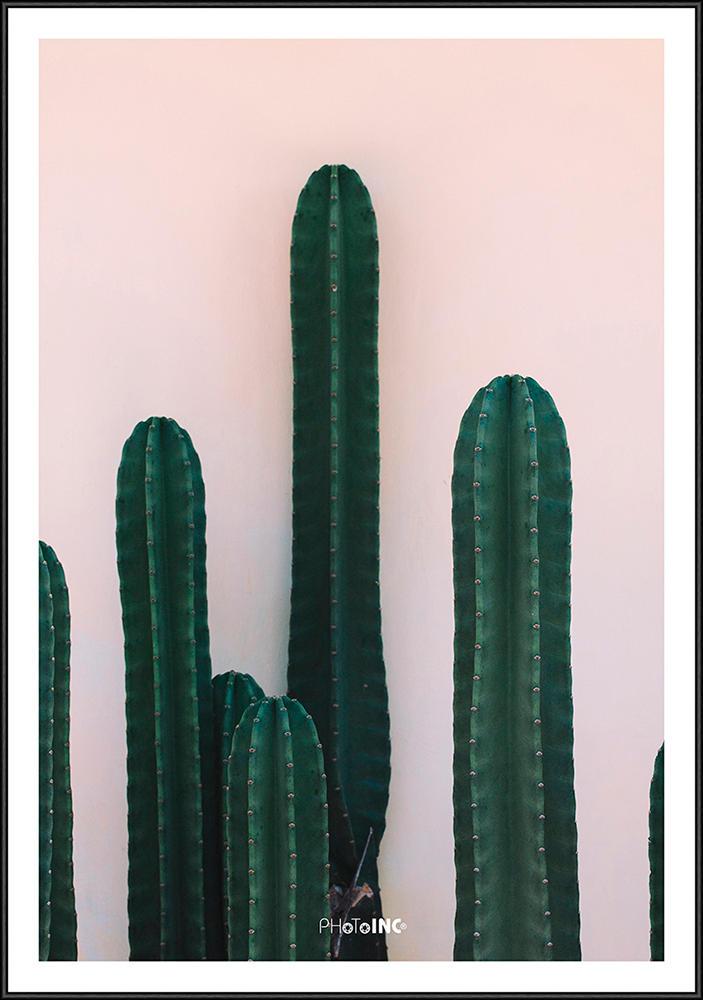 Image of   Nacked Cactus billede