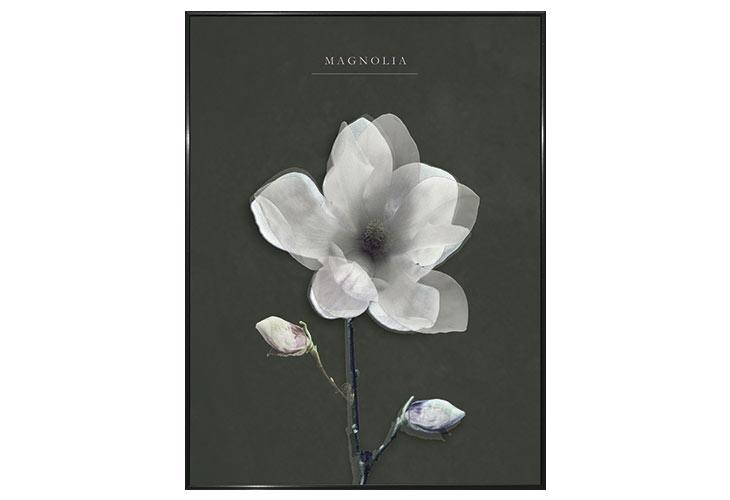 Image of   Magnolia lærredstryk